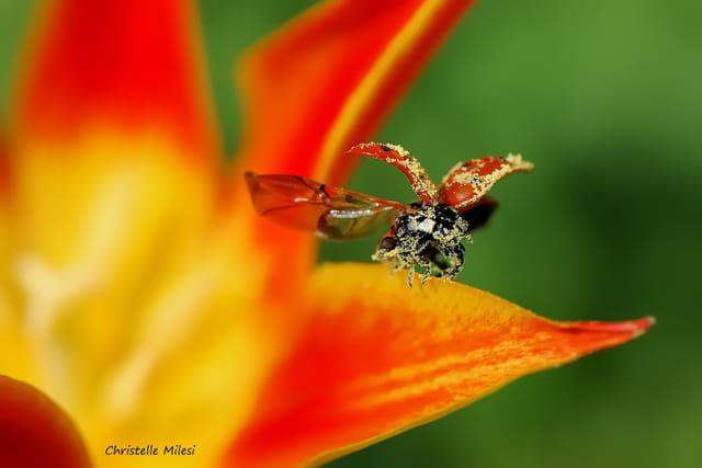 Envolée pollinisatrice