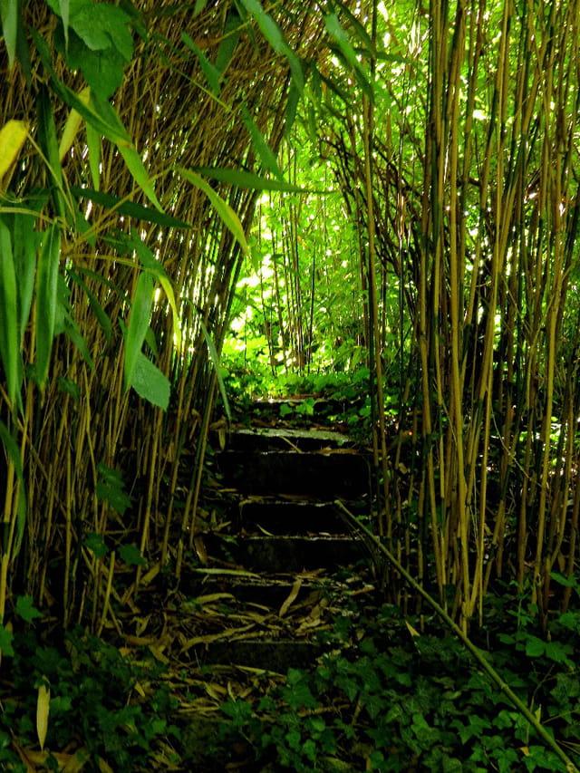 Escalier dans les bambous