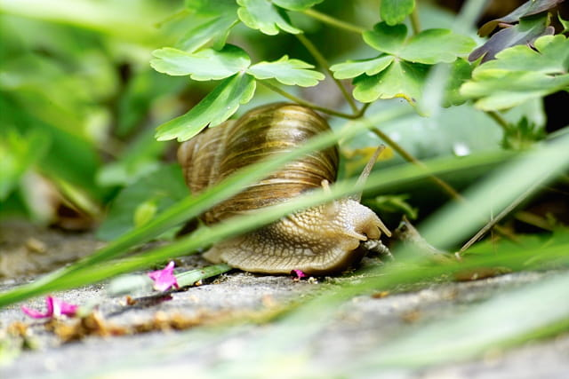 Escargot et feuilles