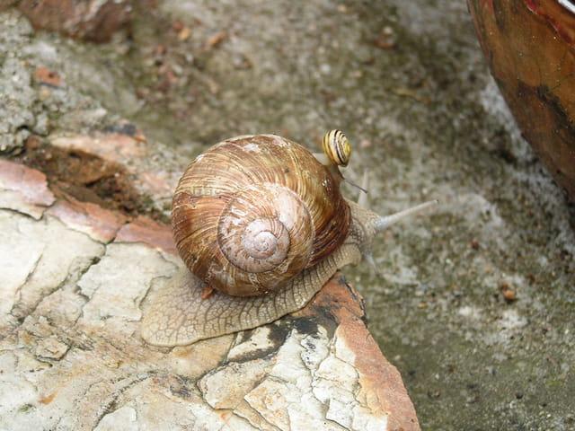 Escargot malin