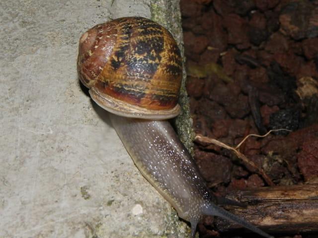 Escargot(s) en balade
