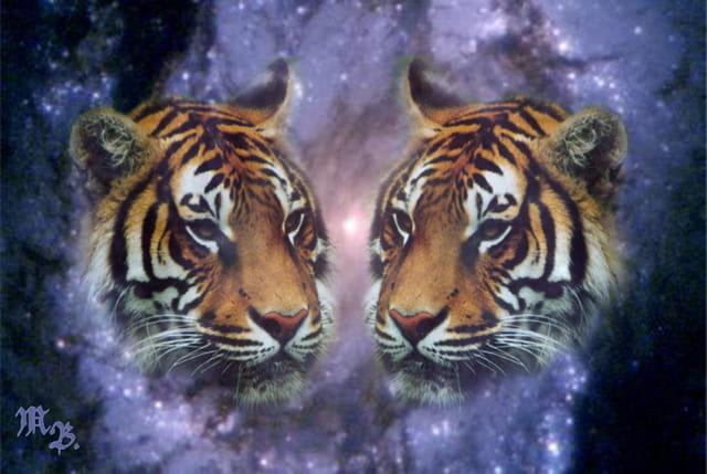 Espace-tigres