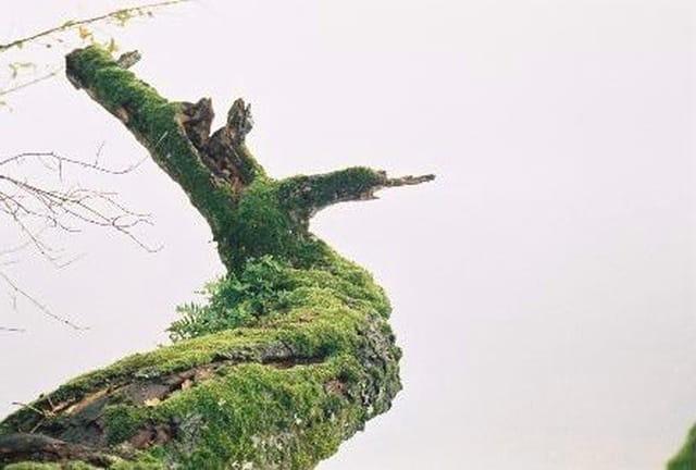 Espiégle chêne mort