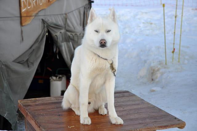 Esquimau du Groenland