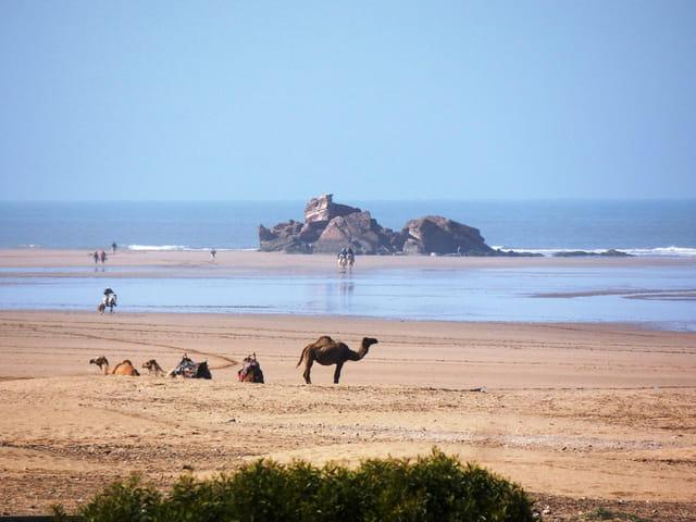 Essaouira la plage et ses dromadaires