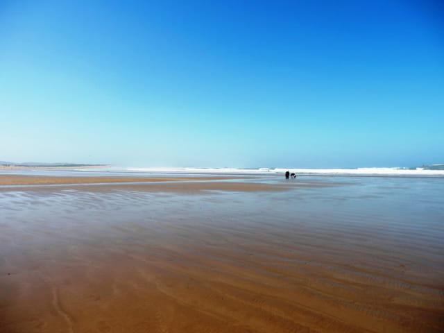 Essaouira promenade sur la plage