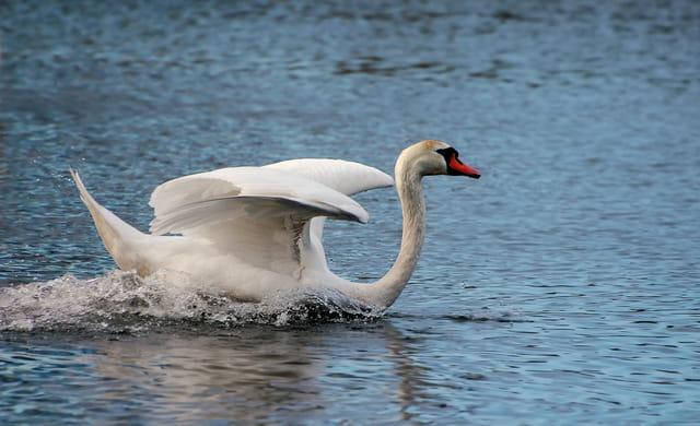 Et hop ! sur l'eau
