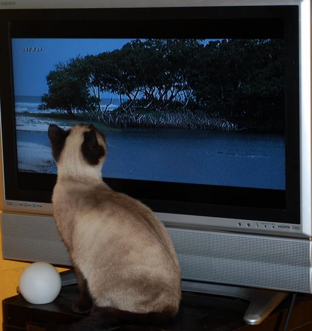 Et oui, je regarde la télé