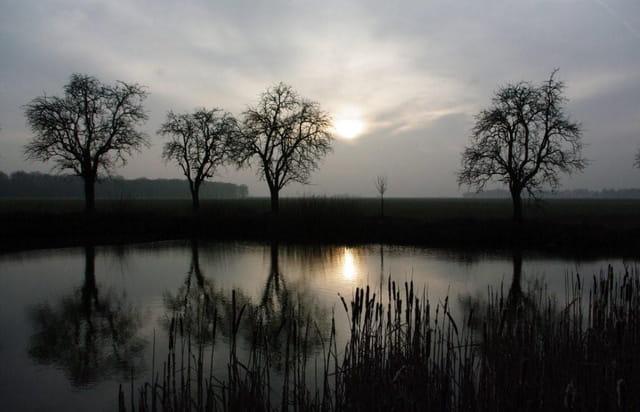 Etang de la ferme de la Fillolière (Yvelines)