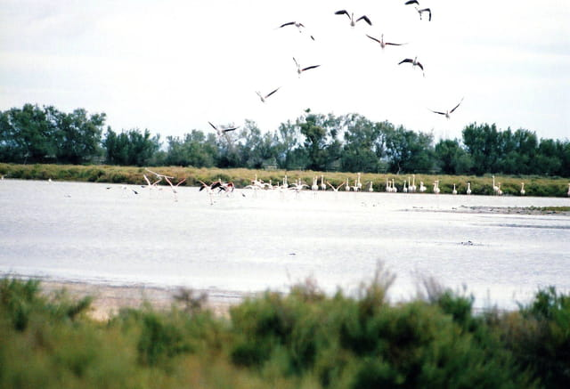 Etang et oiseaux de Camargue.