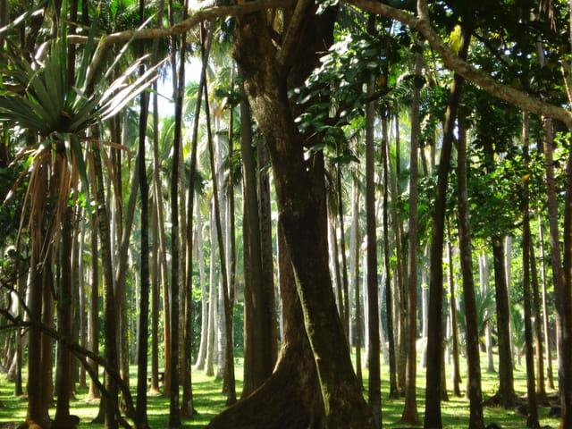 �trange forêt