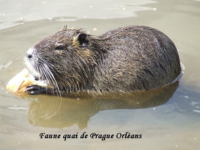Faune Orléans
