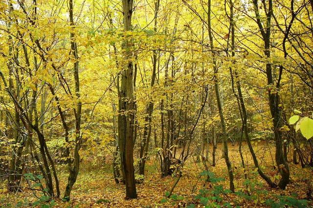 Féérie de l'automne 5