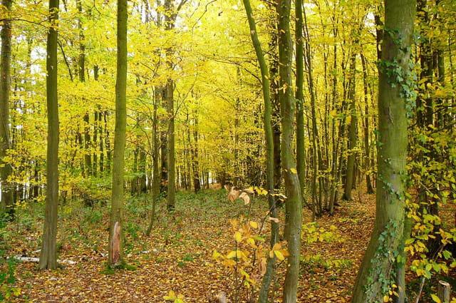Féérie de l'automne 2
