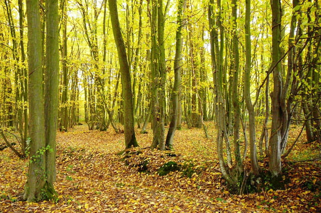 Féérie de l'automne 3
