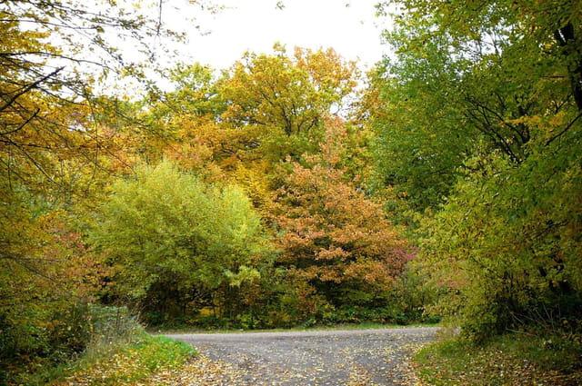 Féérie de l'automne 4