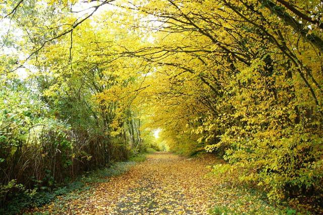 Féérie de l'automne 6