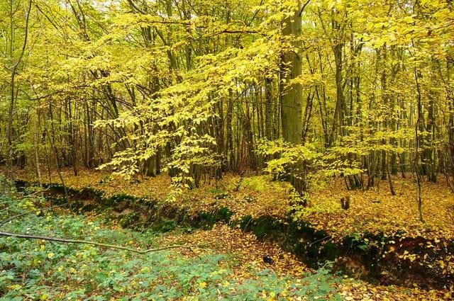 Féérie de l'automne 7