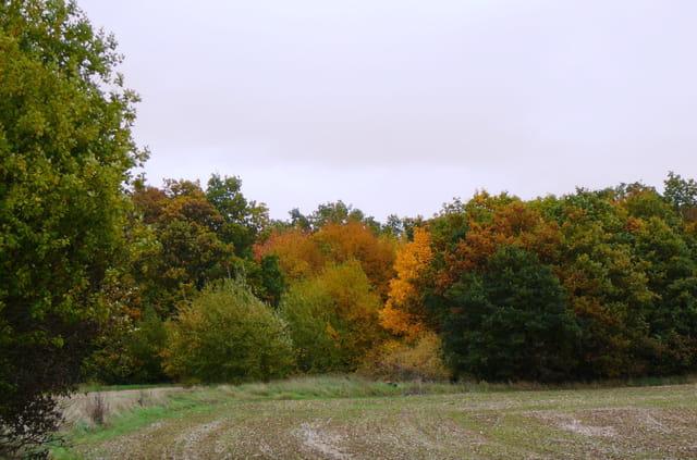 Féérie de l'automne 9