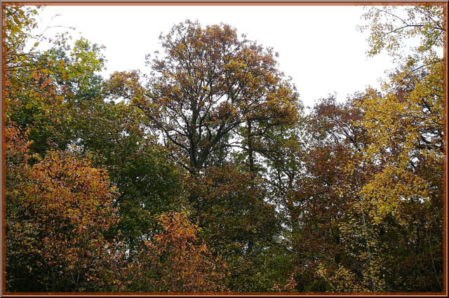 Féérie de l'automne en forêt - 2