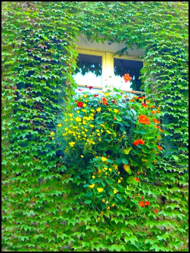 Fenêtre joliment fleurie