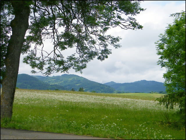 Fenêtre sur le plateau