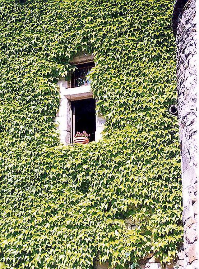 Fenêtre végétale
