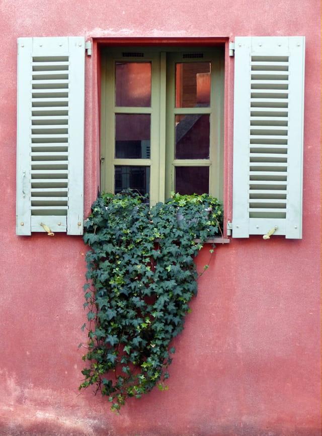 Fenêtre verdoyante...