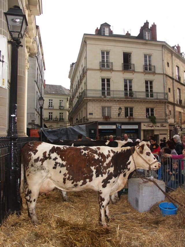 Ferme en ville, à Nantes