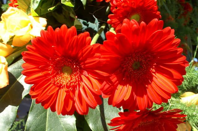 Fête des fleurs 4