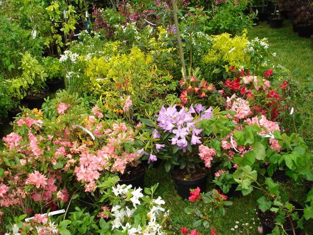 Feu d artifice floral