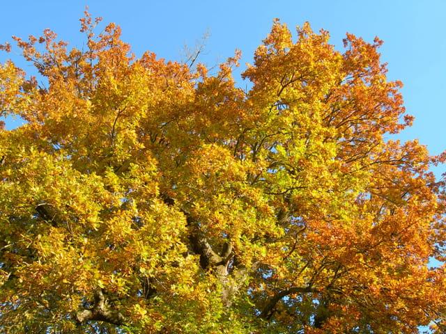 Feuillages d 'automne