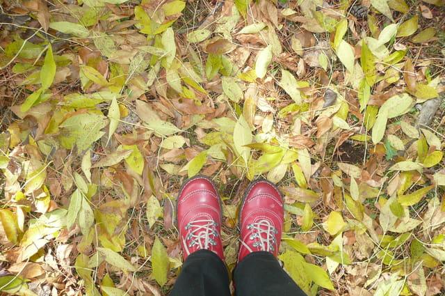 Feuilles, feuilles, feuilles...jaunes
