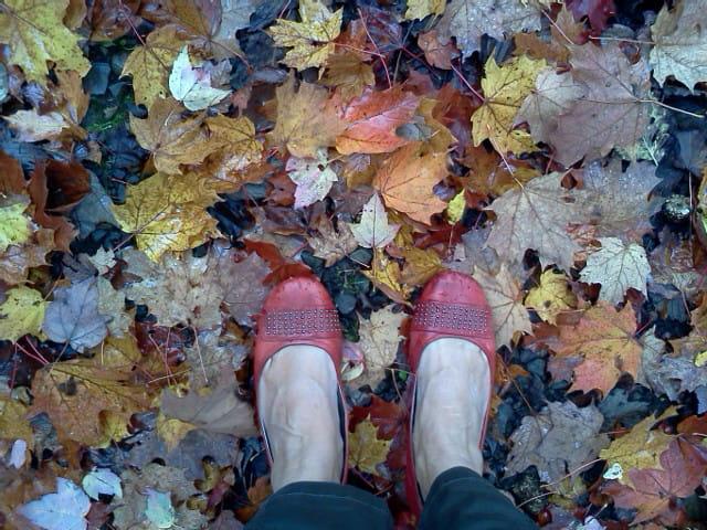 Feuilles, feuilles, feuilles...multicolores
