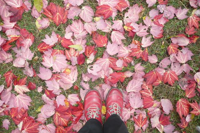 Feuilles, feuilles, feuilles...rouges