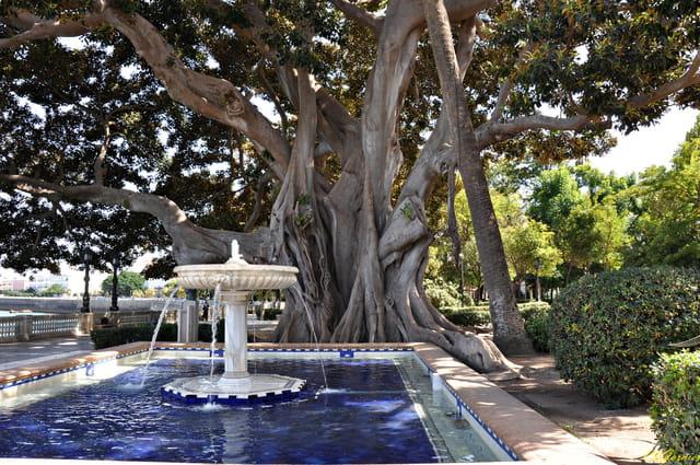 Ficus - Parc Apocada 2