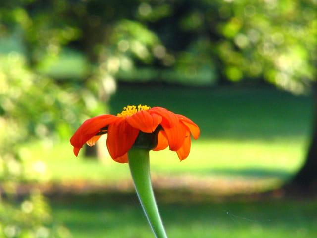 Fiére et belle, la fleur