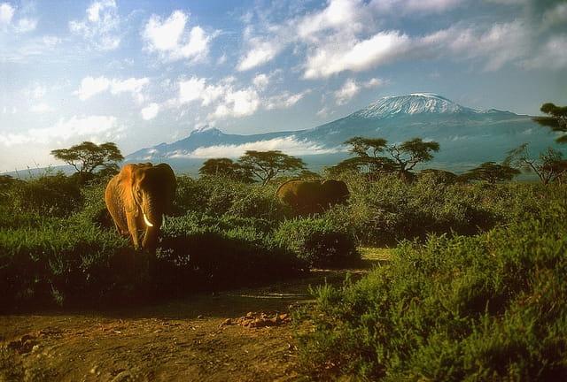 Fin de journée au parc d'Amboseli
