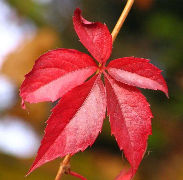 Finesse d'automne