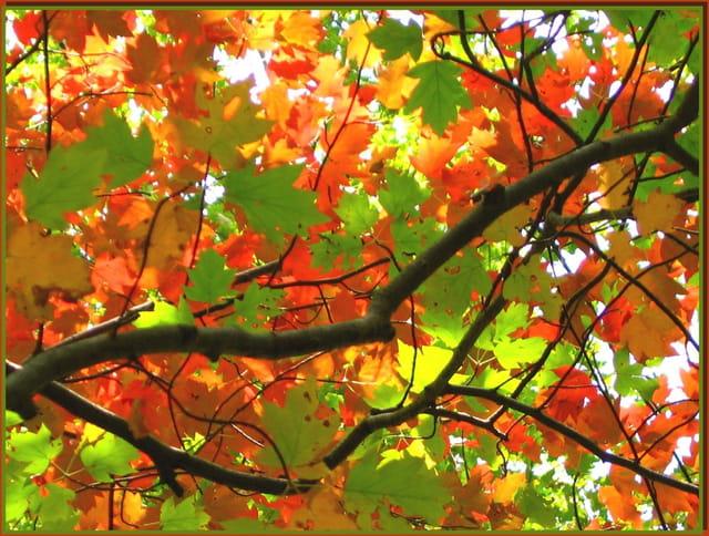 Flamboyantes couleurs d'automne