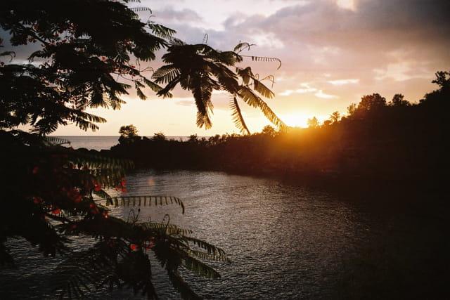 Flamboyants sur coucher de soleil