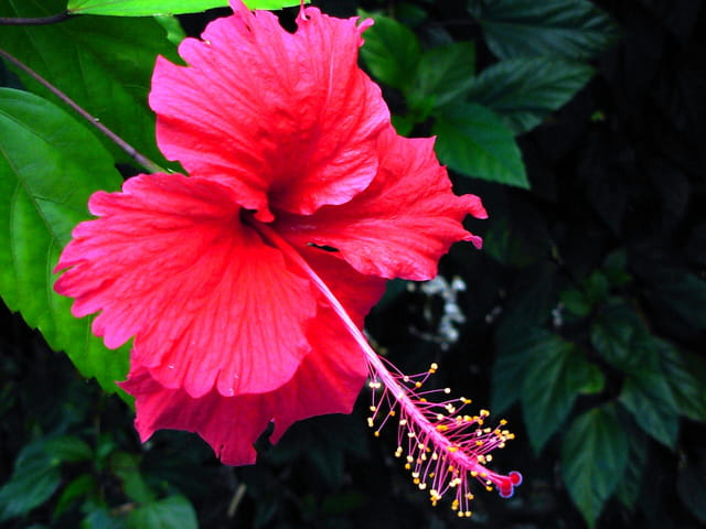 Fleur arbuste