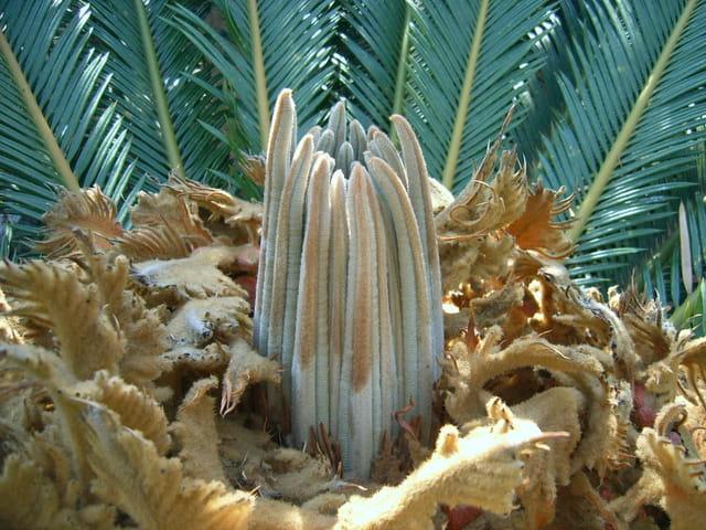 Fleur dans la fleur de palmier