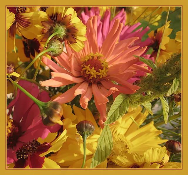Fleur de jach re par francine ancel sur l 39 internaute - Fleur de jachere ...