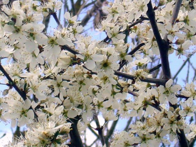 Fleur de marais