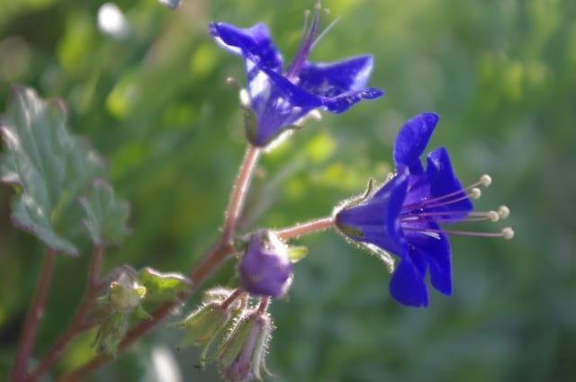Fleur de mon jardin