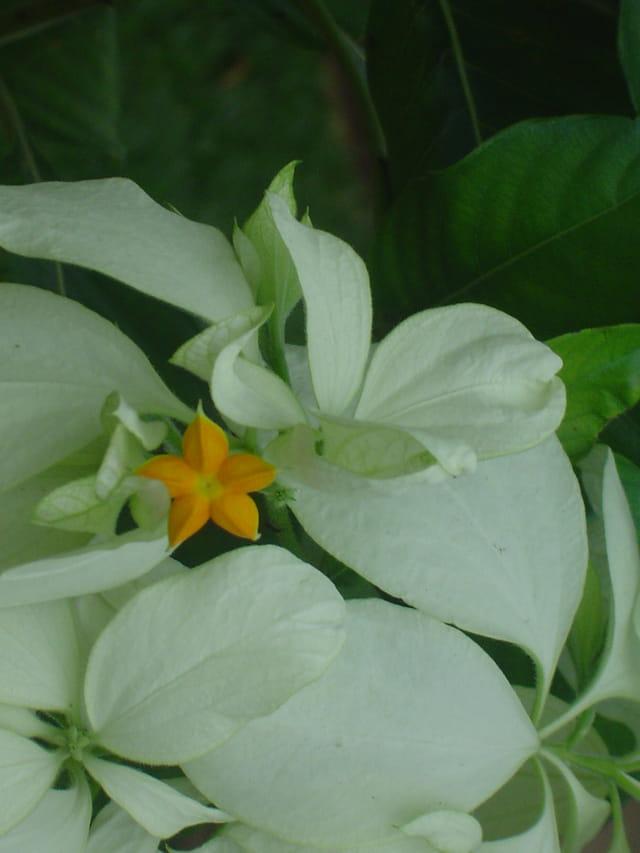 Fleur de voyage