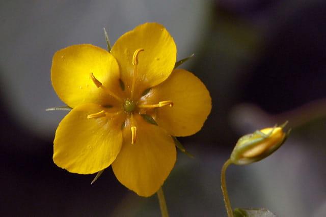 Fleur des bois par Bernard PASQUIER sur LInternaute ~ Fleurs Des Bois