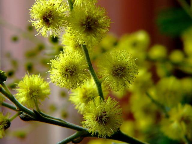 Fleur du soleil par serge agombart sur l 39 internaute - Fleur du soleil ...