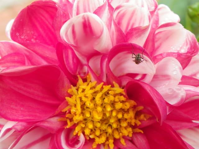 Fleur et son employé(e)